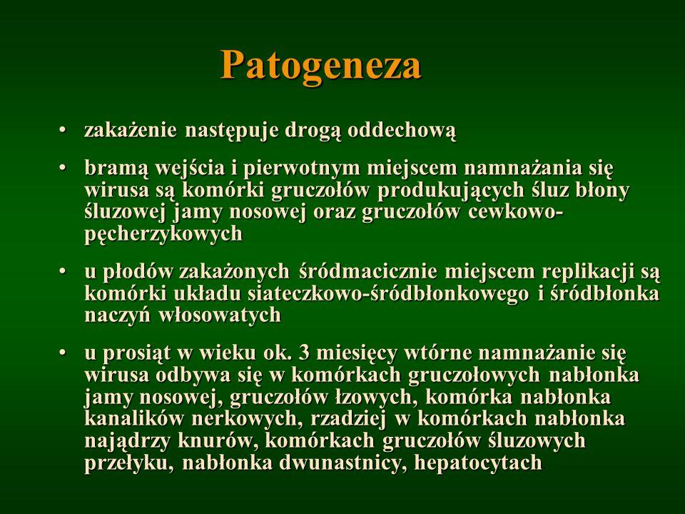 Patogeneza zakażenie następuje drogą oddechową