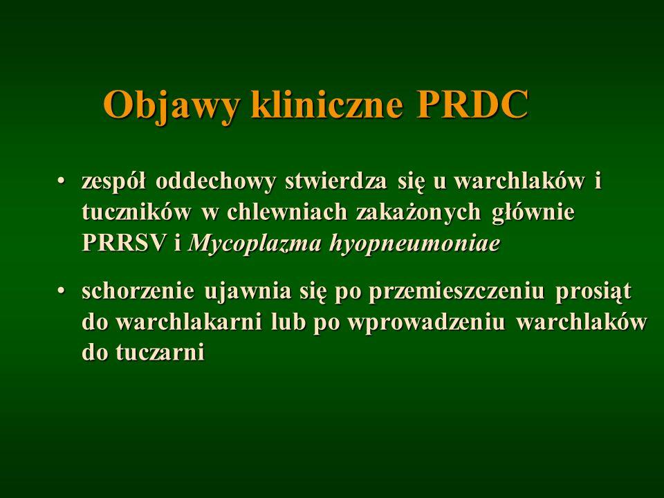 Objawy kliniczne PRDC zespół oddechowy stwierdza się u warchlaków i tuczników w chlewniach zakażonych głównie PRRSV i Mycoplazma hyopneumoniae.