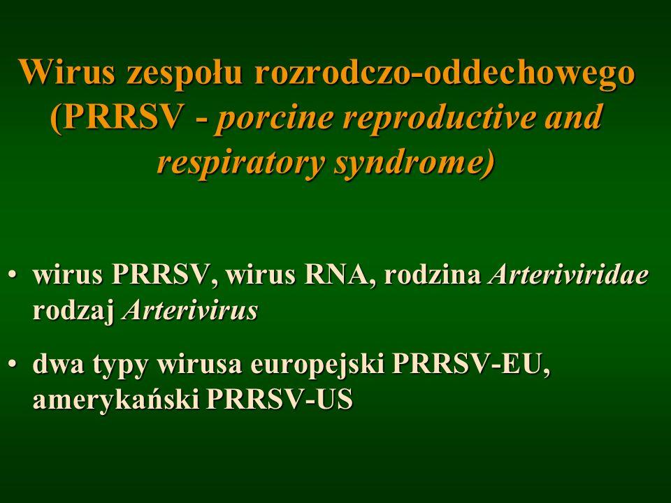 Wirus zespołu rozrodczo-oddechowego (PRRSV - porcine reproductive and respiratory syndrome)