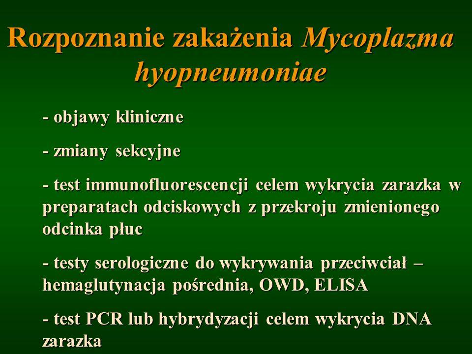 Rozpoznanie zakażenia Mycoplazma hyopneumoniae