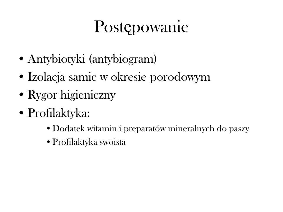 Postępowanie Antybiotyki (antybiogram)