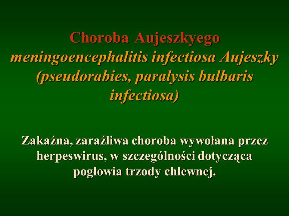 Choroba Aujeszkyego meningoencephalitis infectiosa Aujeszky (pseudorabies, paralysis bulbaris infectiosa)