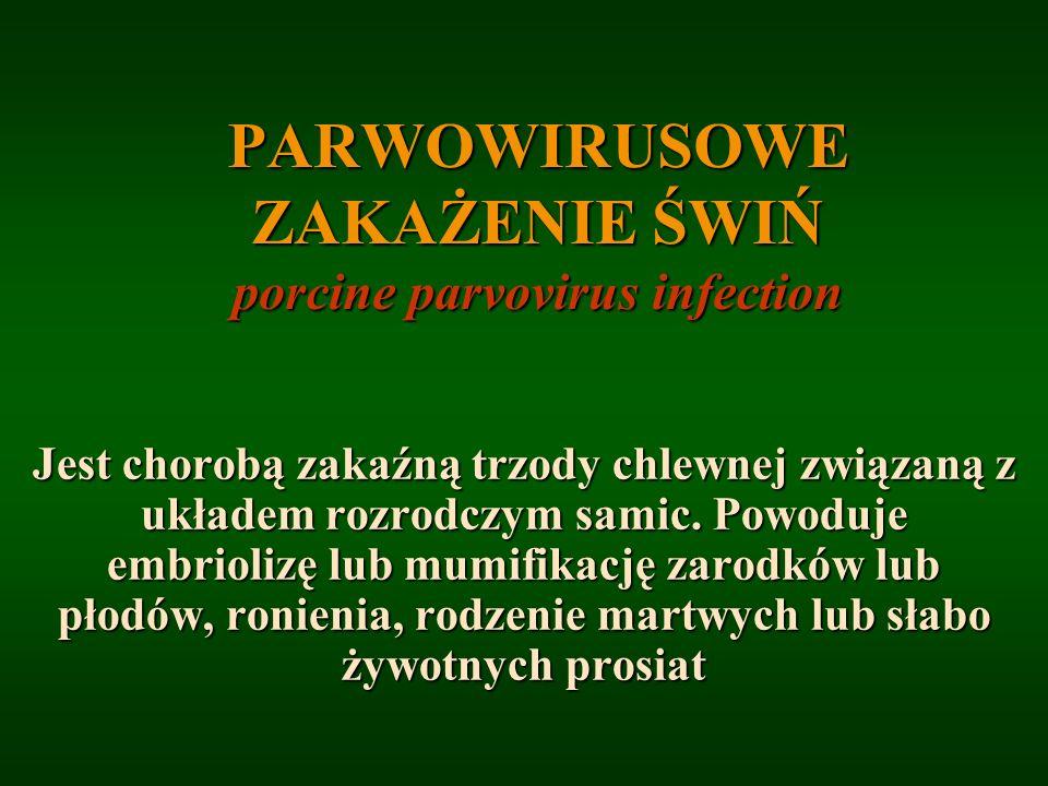PARWOWIRUSOWE ZAKAŻENIE ŚWIŃ porcine parvovirus infection