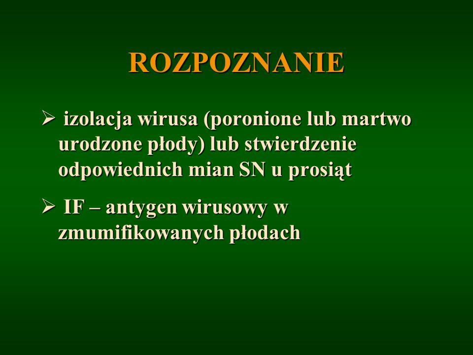 ROZPOZNANIE izolacja wirusa (poronione lub martwo urodzone płody) lub stwierdzenie odpowiednich mian SN u prosiąt.