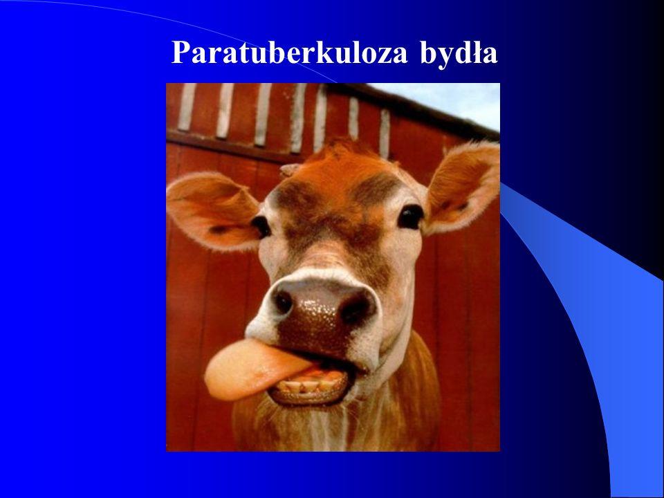 Paratuberkuloza bydła