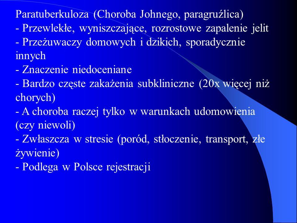 Paratuberkuloza (Choroba Johnego, paragruźlica) - Przewlekłe, wyniszczające, rozrostowe zapalenie jelit - Przeżuwaczy domowych i dzikich, sporadycznie innych - Znaczenie niedoceniane - Bardzo częste zakażenia subkliniczne (20x więcej niż chorych) - A choroba raczej tylko w warunkach udomowienia (czy niewoli) - Zwłaszcza w stresie (poród, stłoczenie, transport, złe żywienie) - Podlega w Polsce rejestracji