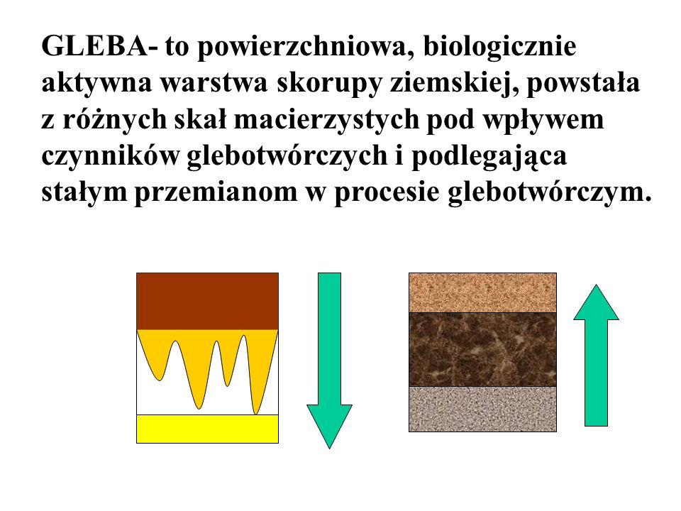 GLEBA- to powierzchniowa, biologicznie aktywna warstwa skorupy ziemskiej, powstała z różnych skał macierzystych pod wpływem czynników glebotwórczych i podlegająca stałym przemianom w procesie glebotwórczym.