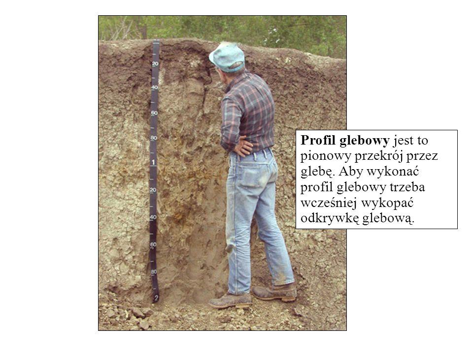 Profil glebowy jest to pionowy przekrój przez glebę