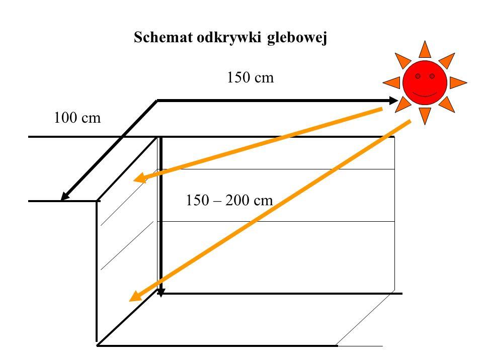 Schemat odkrywki glebowej