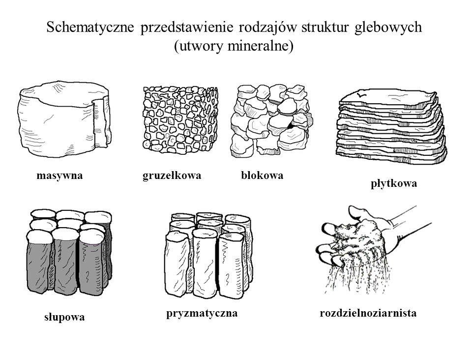 Schematyczne przedstawienie rodzajów struktur glebowych (utwory mineralne)