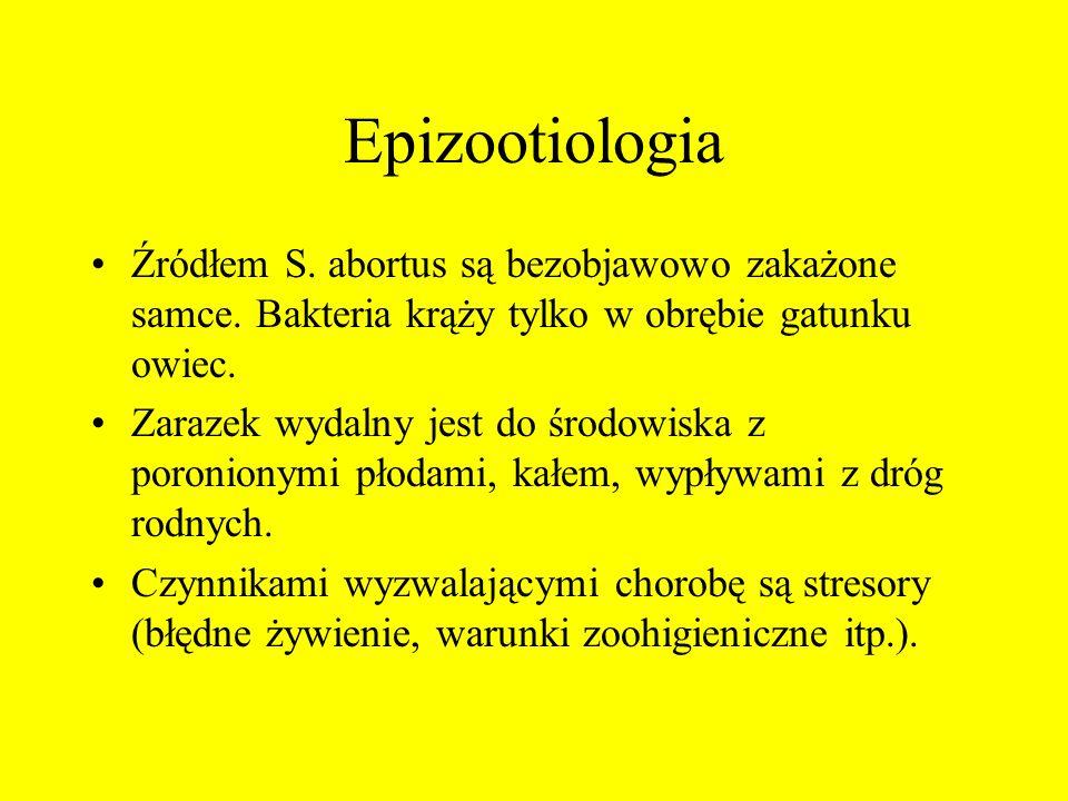 Epizootiologia Źródłem S. abortus są bezobjawowo zakażone samce. Bakteria krąży tylko w obrębie gatunku owiec.
