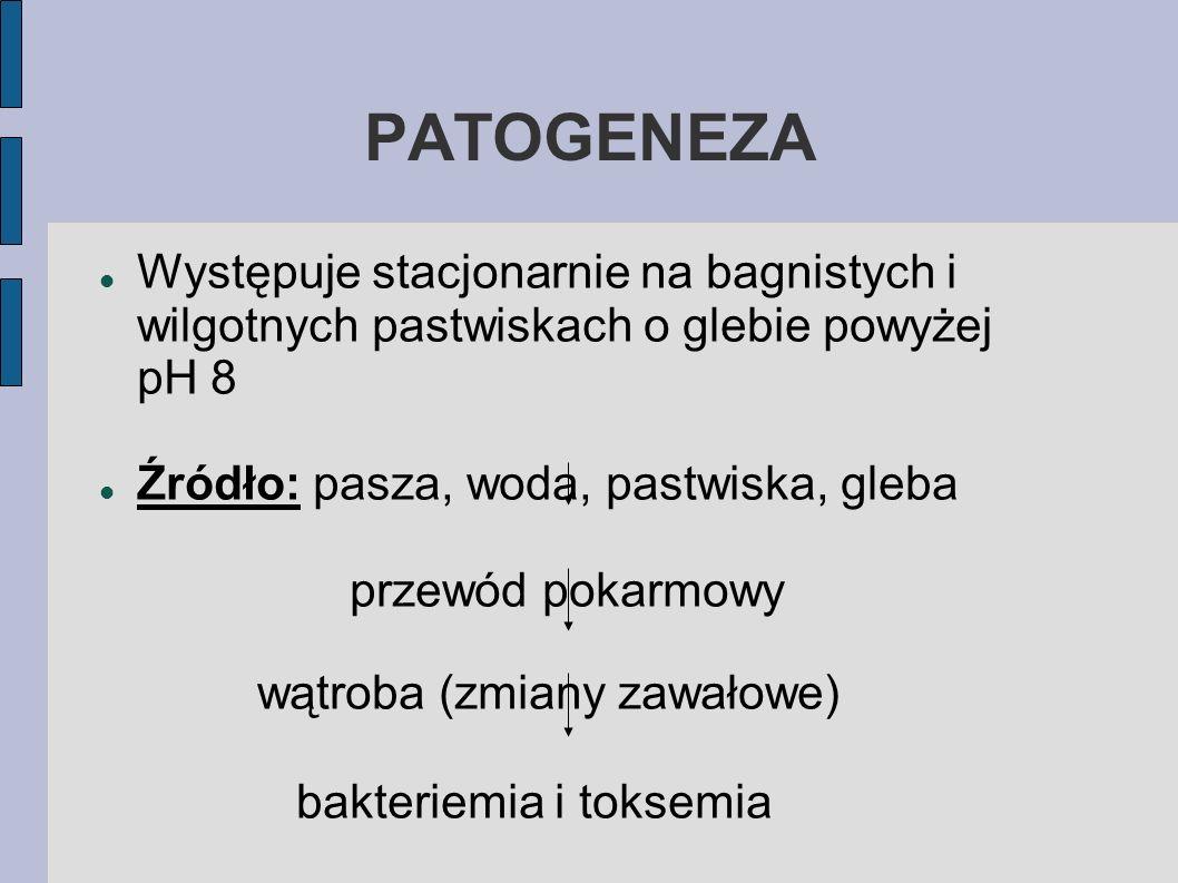PATOGENEZA Występuje stacjonarnie na bagnistych i wilgotnych pastwiskach o glebie powyżej pH 8.