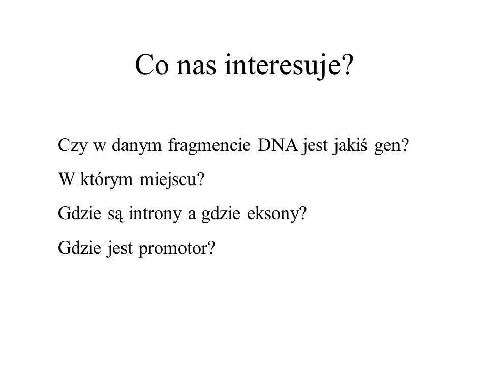 Co nas interesuje Czy w danym fragmencie DNA jest jakiś gen