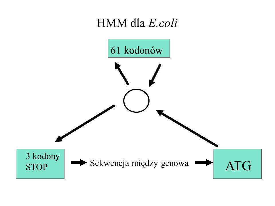 HMM dla E.coli 61 kodonów 3 kodony STOP Sekwencja między genowa ATG