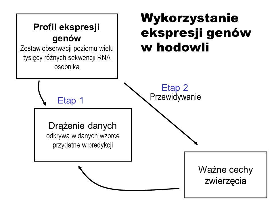 Profil ekspresji genów