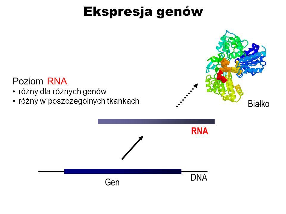 Ekspresja genów Poziom RNA Białko RNA DNA Gen różny dla różnych genów