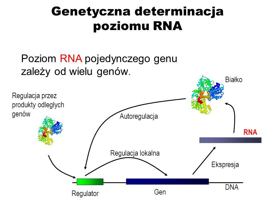 Genetyczna determinacja poziomu RNA