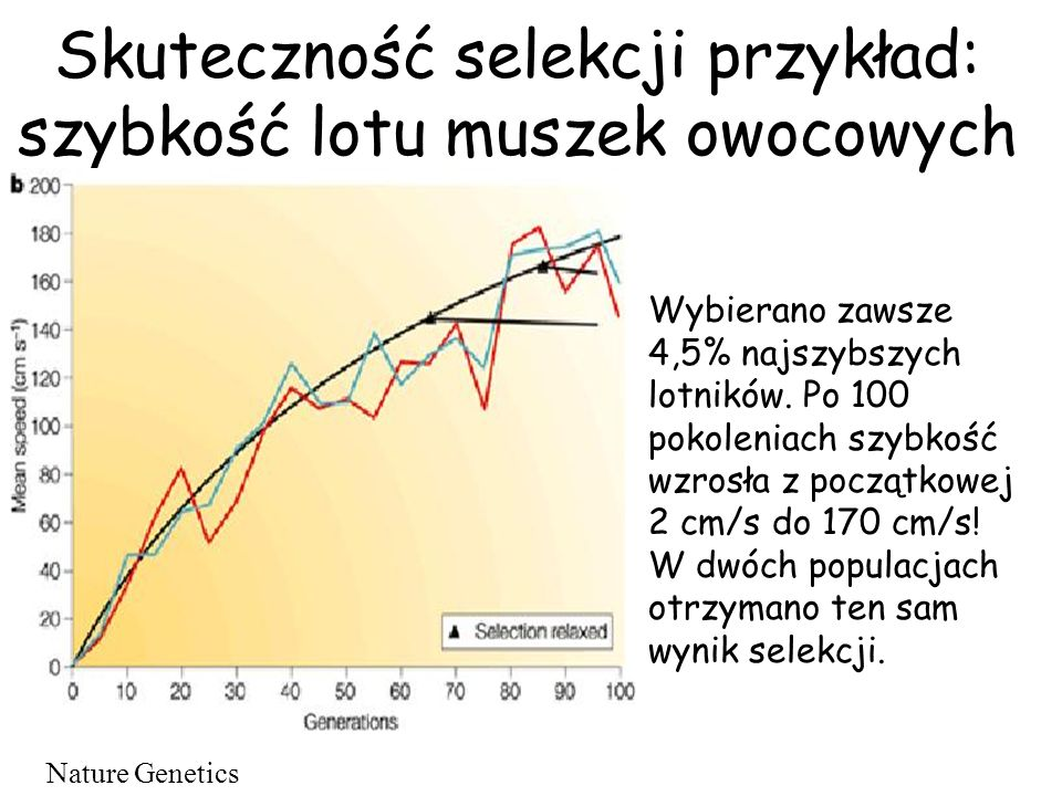 Skuteczność selekcji przykład: szybkość lotu muszek owocowych