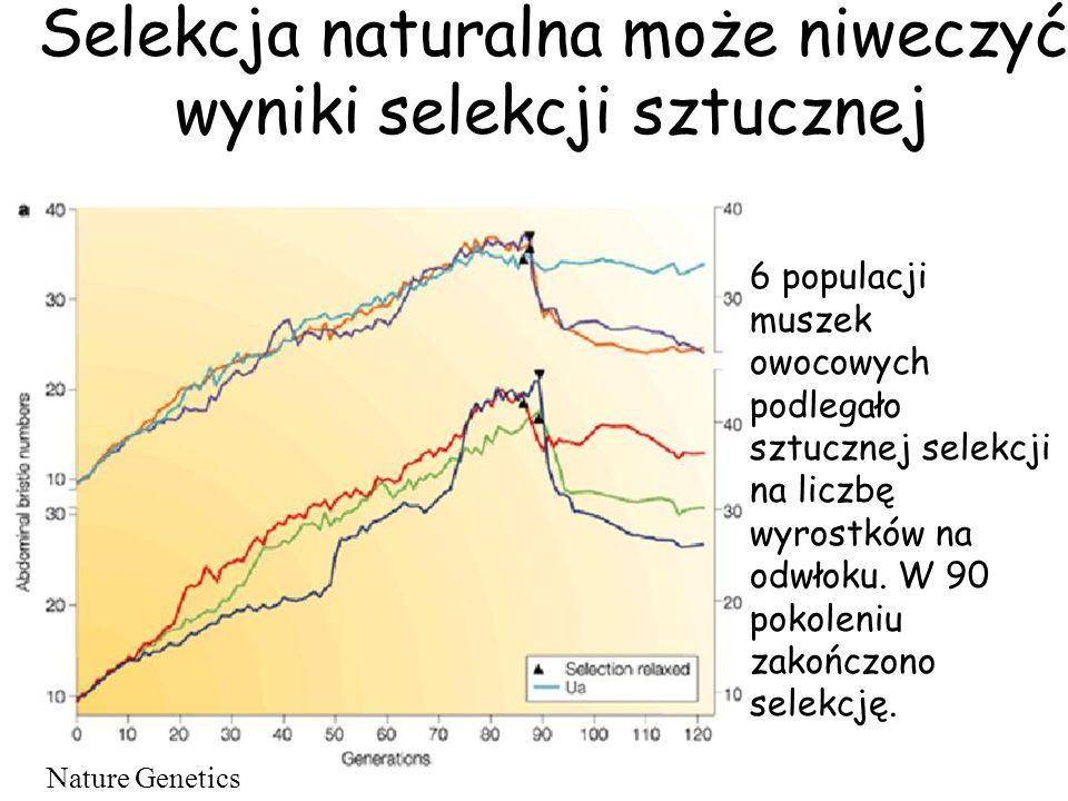 Selekcja naturalna może niweczyć wyniki selekcji sztucznej