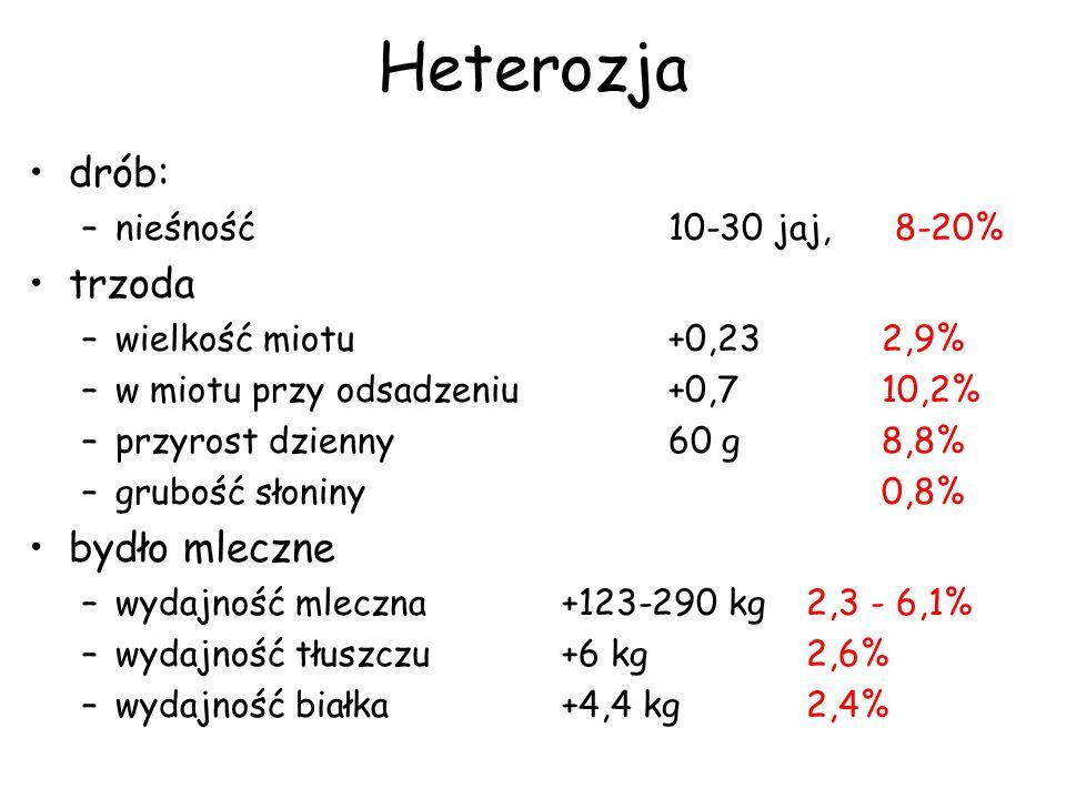 Heterozja drób: trzoda bydło mleczne nieśność 10-30 jaj, 8-20%