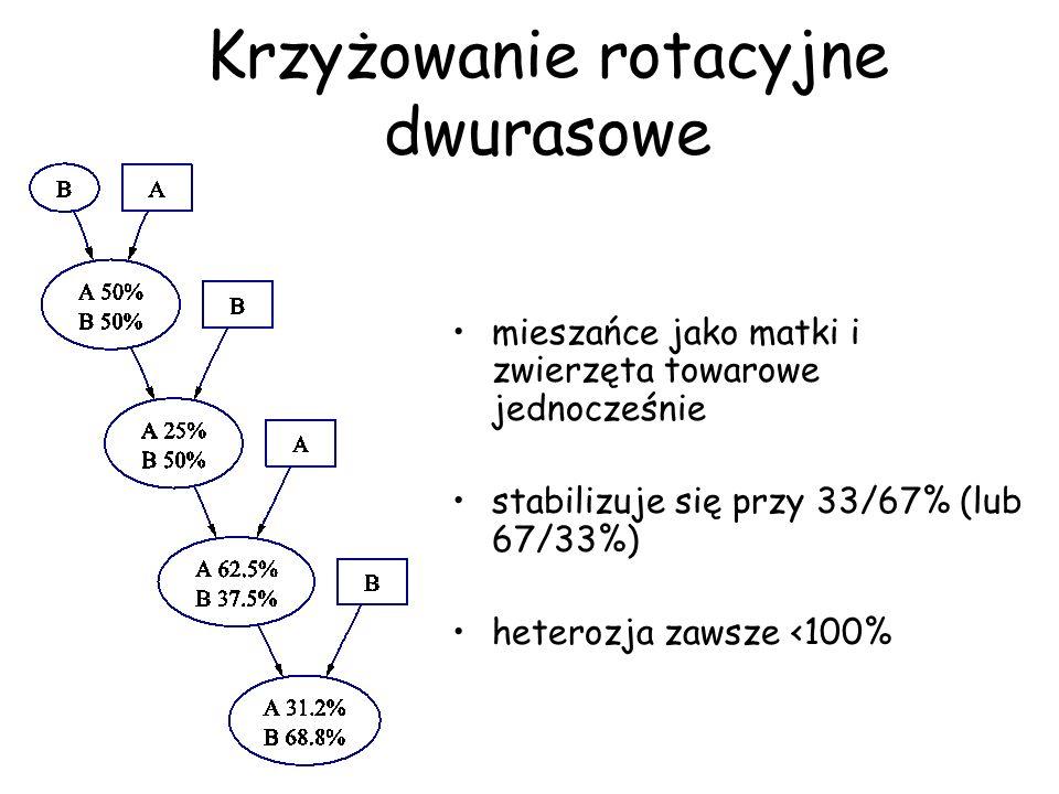 Krzyżowanie rotacyjne dwurasowe