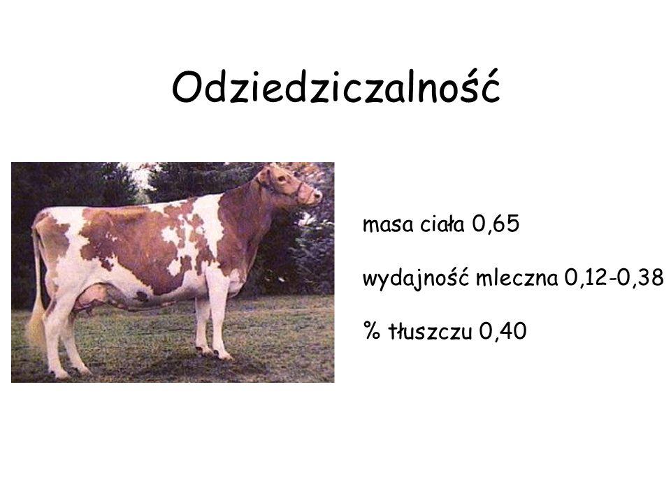Odziedziczalność masa ciała 0,65 wydajność mleczna 0,12-0,38