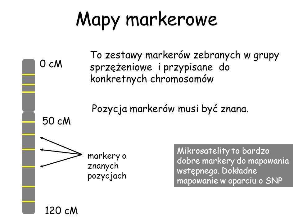 Mapy markerowe To zestawy markerów zebranych w grupy sprzężeniowe i przypisane do konkretnych chromosomów.