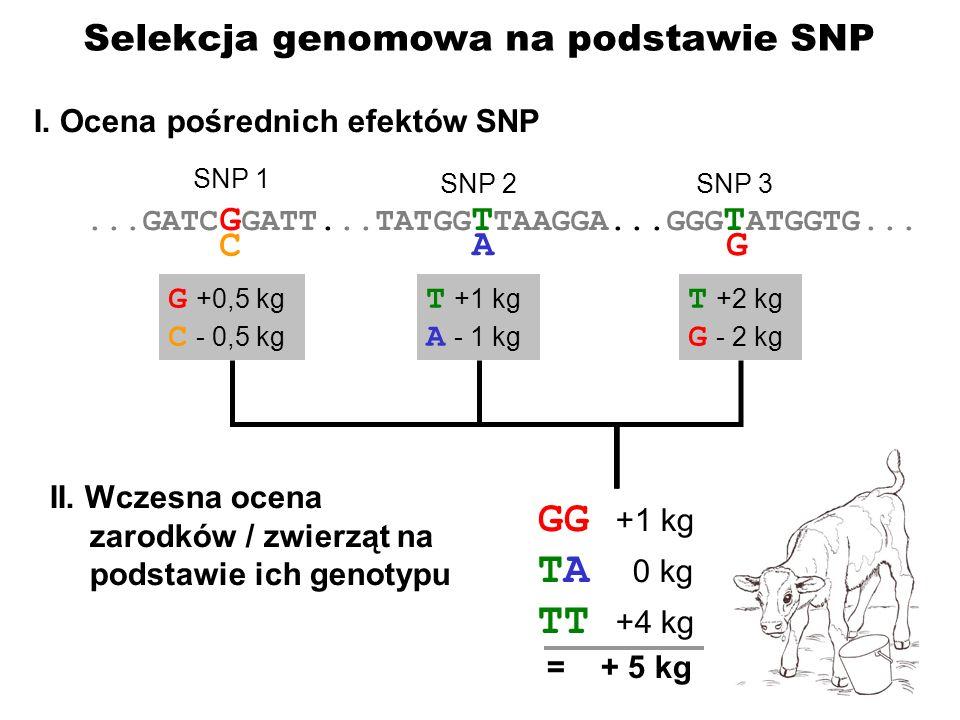 GG +1 kg TA 0 kg TT +4 kg Selekcja genomowa na podstawie SNP C A G