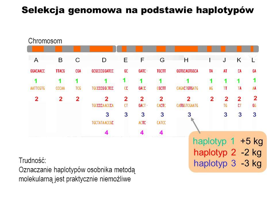 Selekcja genomowa na podstawie haplotypów