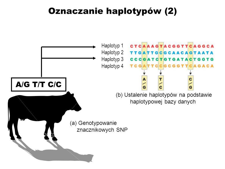 Oznaczanie haplotypów (2)