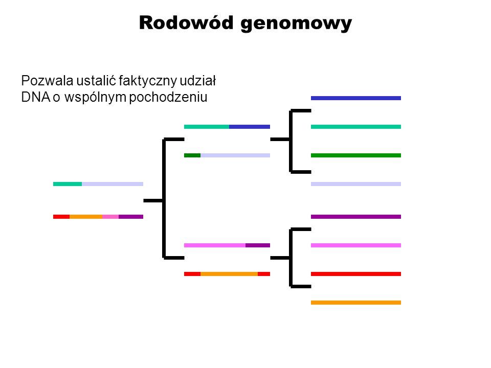Rodowód genomowy Pozwala ustalić faktyczny udział DNA o wspólnym pochodzeniu