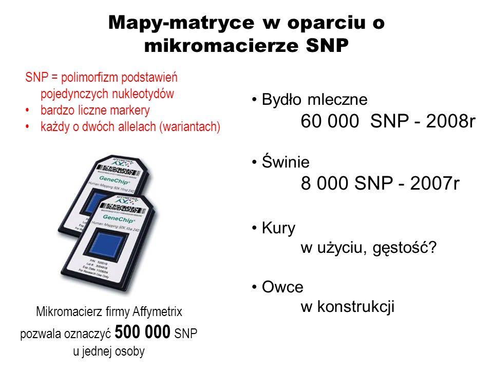 Mapy-matryce w oparciu o mikromacierze SNP