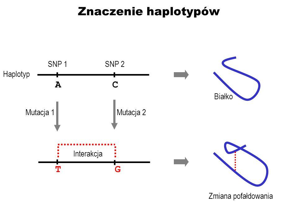 Znaczenie haplotypów A C T G SNP 1 SNP 2 Haplotyp Białko Mutacja 1