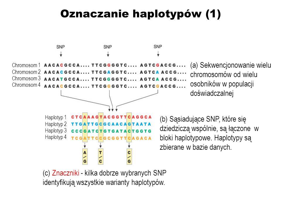 Oznaczanie haplotypów (1)