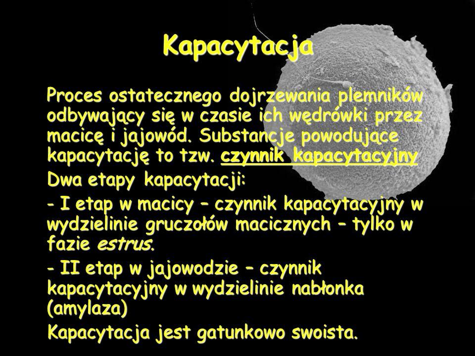 Kapacytacja