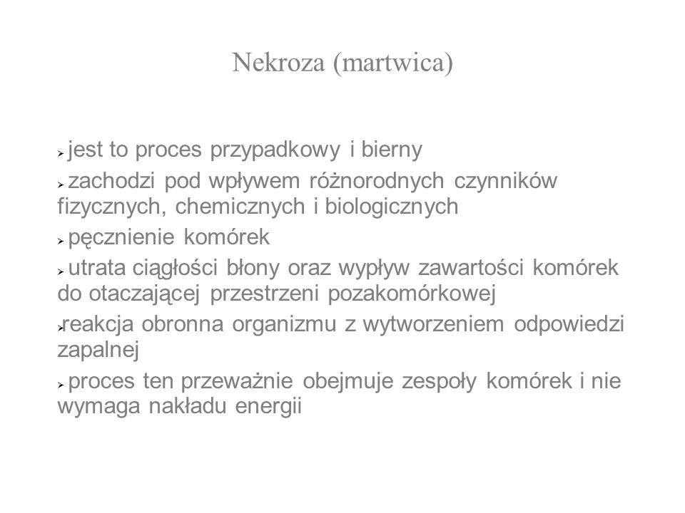 Nekroza (martwica) jest to proces przypadkowy i bierny
