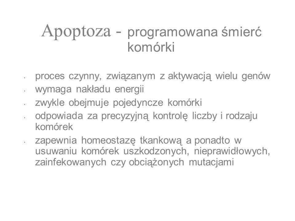 Apoptoza - programowana śmierć komórki