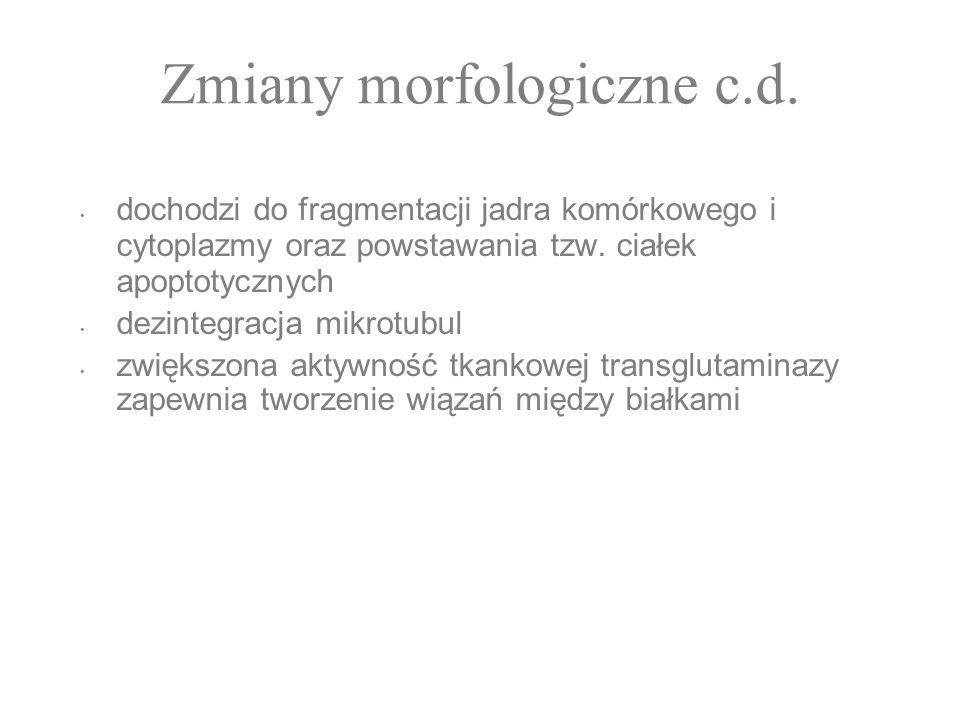 Zmiany morfologiczne c.d.