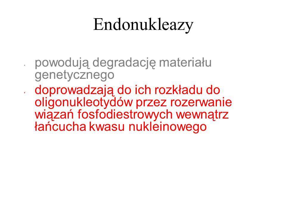 Endonukleazy powodują degradację materiału genetycznego