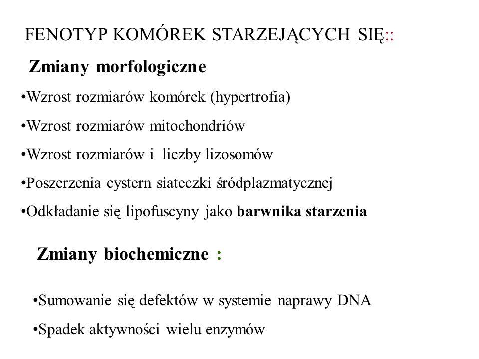 FENOTYP KOMÓREK STARZEJĄCYCH SIĘ::