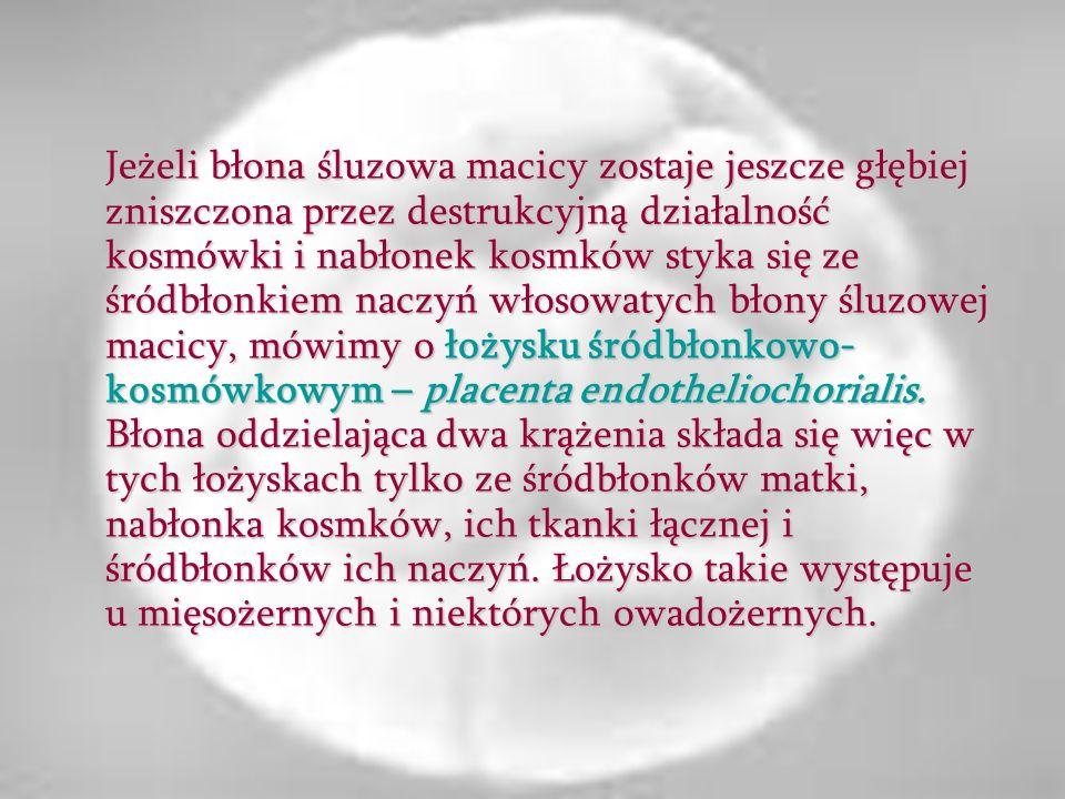 Jeżeli błona śluzowa macicy zostaje jeszcze głębiej zniszczona przez destrukcyjną działalność kosmówki i nabłonek kosmków styka się ze śródbłonkiem naczyń włosowatych błony śluzowej macicy, mówimy o łożysku śródbłonkowo-kosmówkowym – placenta endotheliochorialis.