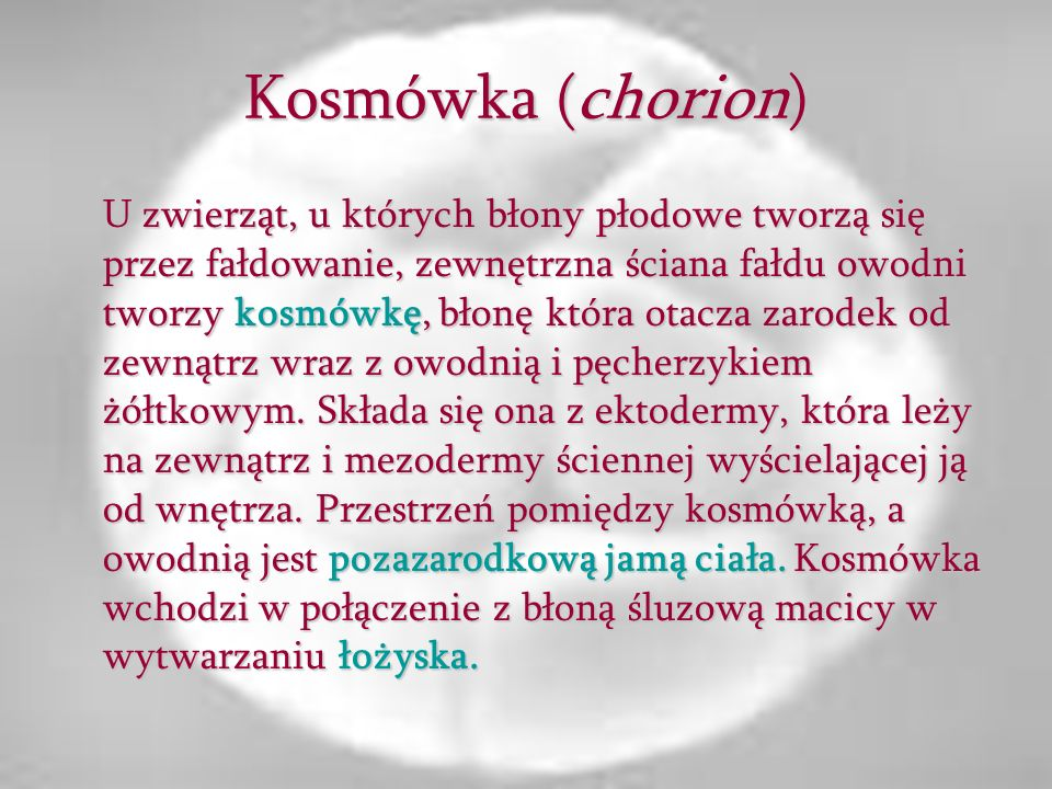 Kosmówka (chorion)