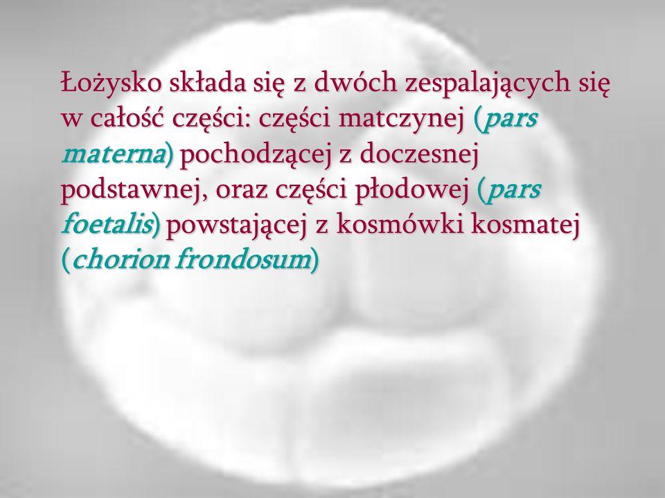 Łożysko składa się z dwóch zespalających się w całość części: części matczynej (pars materna) pochodzącej z doczesnej podstawnej, oraz części płodowej (pars foetalis) powstającej z kosmówki kosmatej (chorion frondosum)