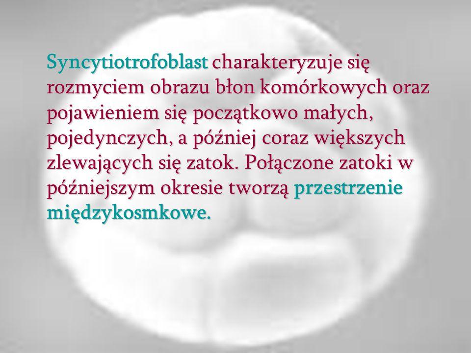 Syncytiotrofoblast charakteryzuje się rozmyciem obrazu błon komórkowych oraz pojawieniem się początkowo małych, pojedynczych, a później coraz większych zlewających się zatok.