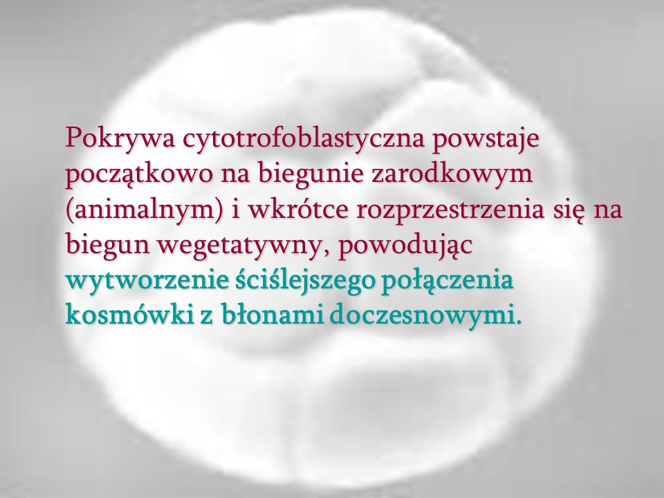 Pokrywa cytotrofoblastyczna powstaje początkowo na biegunie zarodkowym (animalnym) i wkrótce rozprzestrzenia się na biegun wegetatywny, powodując wytworzenie ściślejszego połączenia kosmówki z błonami doczesnowymi.