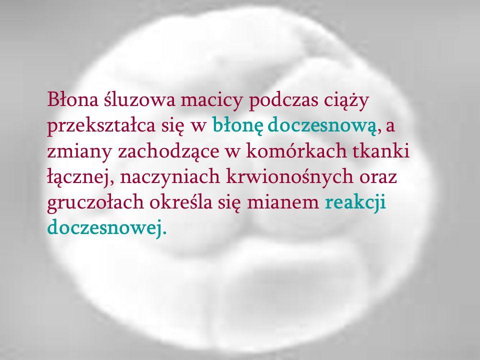 Błona śluzowa macicy podczas ciąży przekształca się w błonę doczesnową, a zmiany zachodzące w komórkach tkanki łącznej, naczyniach krwionośnych oraz gruczołach określa się mianem reakcji doczesnowej.