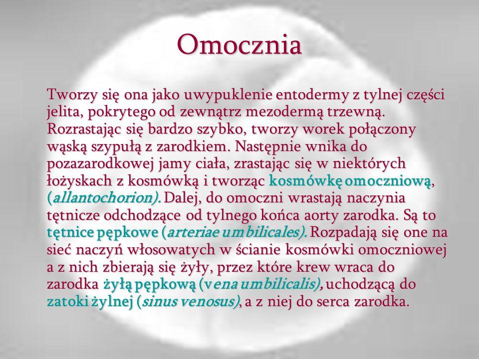 Omocznia