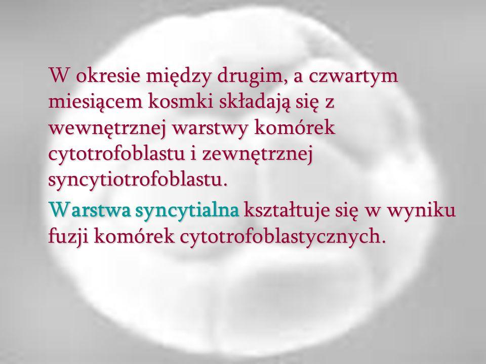 W okresie między drugim, a czwartym miesiącem kosmki składają się z wewnętrznej warstwy komórek cytotrofoblastu i zewnętrznej syncytiotrofoblastu.