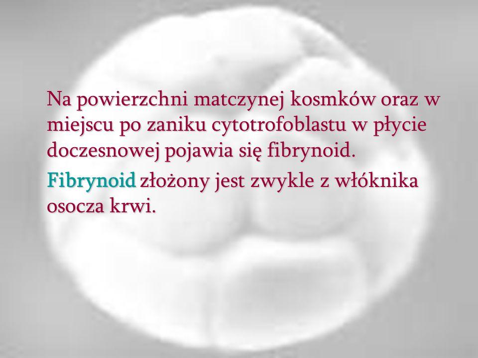 Na powierzchni matczynej kosmków oraz w miejscu po zaniku cytotrofoblastu w płycie doczesnowej pojawia się fibrynoid.