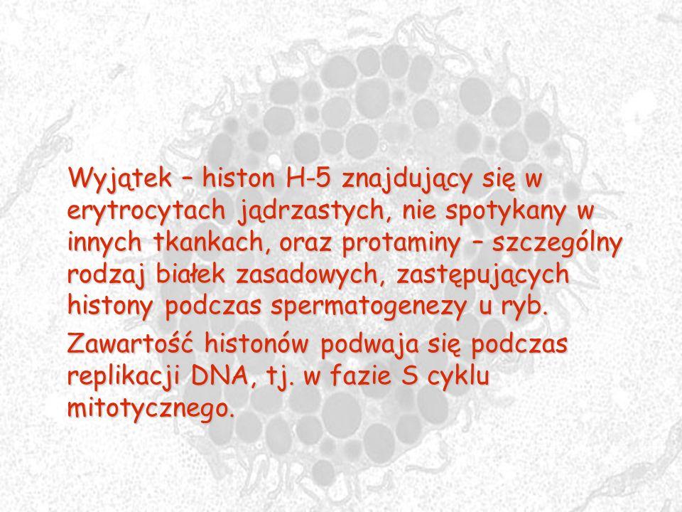 Wyjątek – histon H-5 znajdujący się w erytrocytach jądrzastych, nie spotykany w innych tkankach, oraz protaminy – szczególny rodzaj białek zasadowych, zastępujących histony podczas spermatogenezy u ryb.
